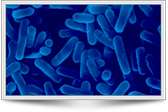 Monitoraggio-Legionella-eco-technology-int