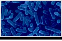 Monitoraggio-Legionella-eco-technology-min