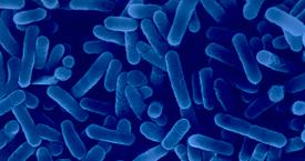 Monitoraggio-Legionella-eco-technology_1